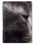 Cat Portrait Spiral Notebook