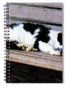 Cat Sleeping On Bench Spiral Notebook