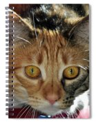 Cat Stare Down Spiral Notebook