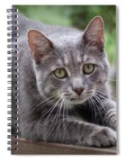 Cat Stretch Spiral Notebook