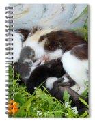 Cat Suckling Spiral Notebook