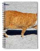 Cat Walk Spiral Notebook