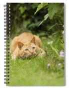 Cat Watching Prey Spiral Notebook