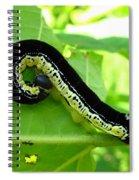 Catalapa Sphinx Caterpillar Spiral Notebook