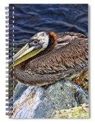 Catalina Pelican Spiral Notebook