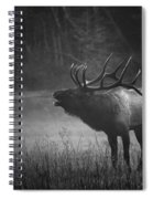 Cataloochee Bull Elk Spiral Notebook