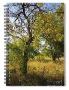 Catalpa Spiral Notebook