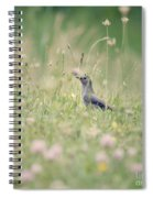 Catbird In The Wildflowers Spiral Notebook