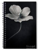 Catch The Light Spiral Notebook
