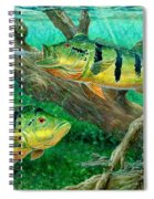 Catching Peacock Bass - Pavon Spiral Notebook