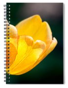 Catching Rays Spiral Notebook
