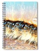 Caterpillar-01 Spiral Notebook