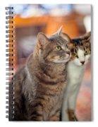 Cats Spiral Notebook