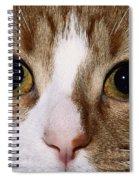 Cats Face Spiral Notebook