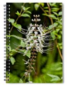 Cat's Whiiskers Spiral Notebook