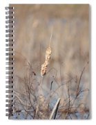 Cattail Gold Spiral Notebook