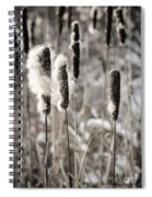Cattails In Winter Spiral Notebook