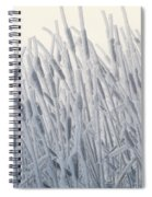 Cattails Typha Latifolia Covered In Snow Spiral Notebook