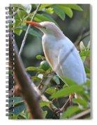 Cattle Egret 1 Spiral Notebook
