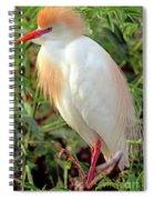 Cattle Egret Adult In Breeding Plumage Spiral Notebook