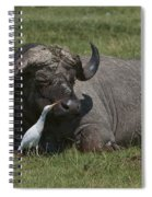Cattle Egret With Cape Buffalo Spiral Notebook