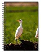 Cattle Egrets Spiral Notebook