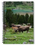 Cattle Grazing In The Pyrenees Spiral Notebook