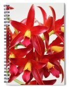 Cattleya Chocolate Drop Kodama Spiral Notebook