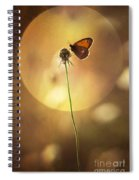 Caught In The Sun Spiral Notebook