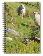 Cautious Sheep In The Pasture Spiral Notebook