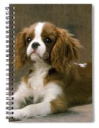 Cavalier King Charles Spaniel Dog Lying Spiral Notebook