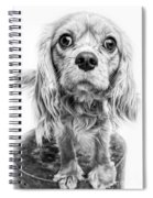 Cavalier King Charles Spaniel Puppy Dog Portrait Spiral Notebook