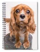 Cavalier King Charles Spaniel Puppy Spiral Notebook