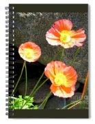 Cavy Poppies Spiral Notebook