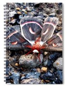 Cecropia Moth Blending In Spiral Notebook