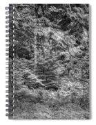 Cedar Along The Trail Of Cedars Glacier National Park Bw Spiral Notebook