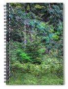 Cedar Along The Trail Of Cedars Glacier National Park  Spiral Notebook