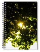 Cedar Filtered Sun Spiral Notebook