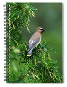 Cedar Waxwing 2 Spiral Notebook