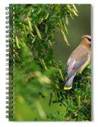 Cedar Waxwing 3 Spiral Notebook