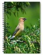 Cedar Waxwing 4 Spiral Notebook