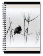 Cedar Waxwing - Black And White  Spiral Notebook