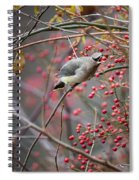 Cedar Waxwing Feeding Spiral Notebook
