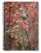 Cedar Waxwing Foraging Spiral Notebook