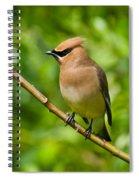 Cedar Waxwing Gathering Nesting Material Spiral Notebook