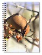 Cedar Waxwing - Img_0010-7x5 Spiral Notebook