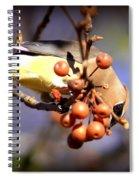 Cedar Waxwing - Img_9760-004 Spiral Notebook