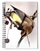 Cedar Waxwing - Img_9835-7x5 Spiral Notebook