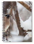 Cedar Waxwing In Winter Spiral Notebook