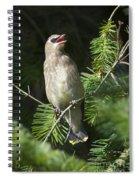 Cedar Waxwing Juvenile 2 Spiral Notebook